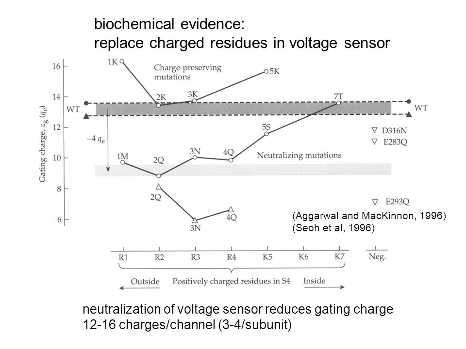 biochemical evidence: replace charged residues in voltage sensor