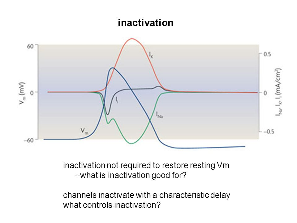 inactivation inactivation not required to restore resting Vm