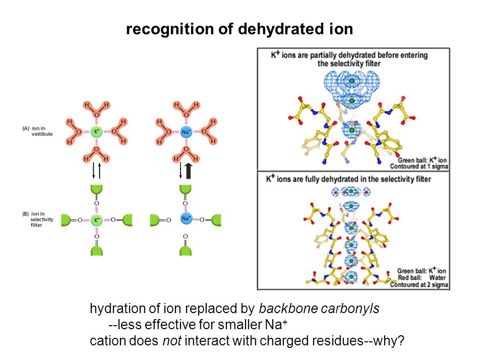 recognition of dehydrated ion