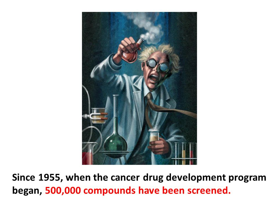 Since 1955, when the cancer drug development program began, 500,000 compounds have been screened.