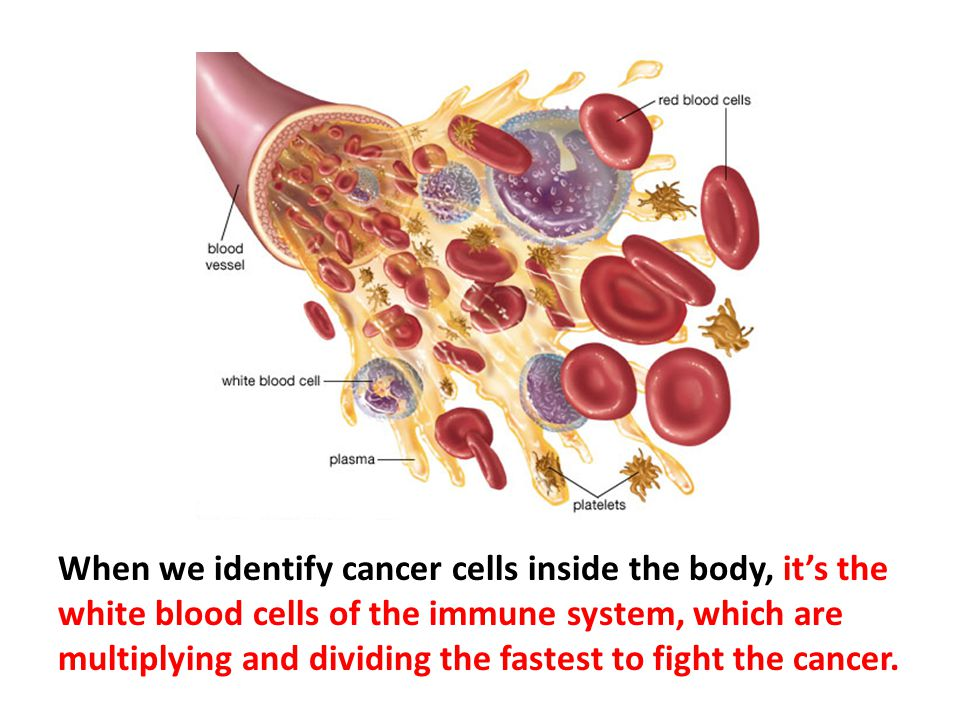 When we identify cancer cells inside the body, it's the white blood cells of the immune system, which are multiplying and dividing the fastest to fight the cancer.
