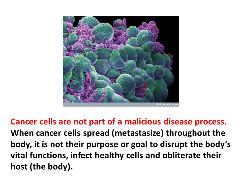 Cancer cells are not part of a malicious disease process