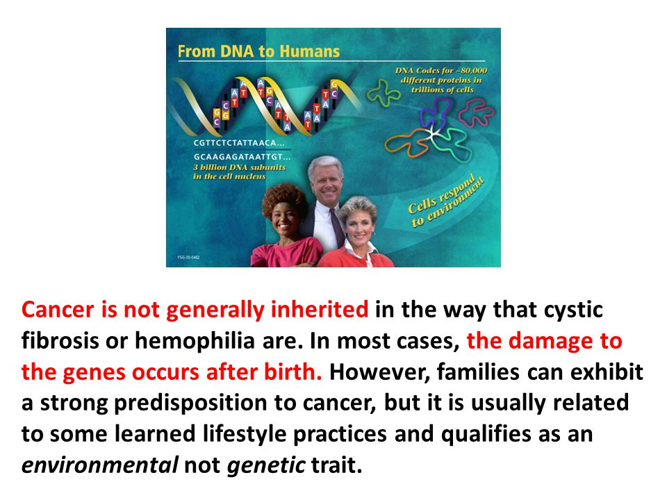 Cancer is not generally inherited in the way that cystic fibrosis or hemophilia are. In most cases, the damage to the genes occurs after birth. However, families can exhibit a strong predisposition to cancer, but it is usually related to some learned lifestyle practices and qualifies as an environmental not genetic trait.