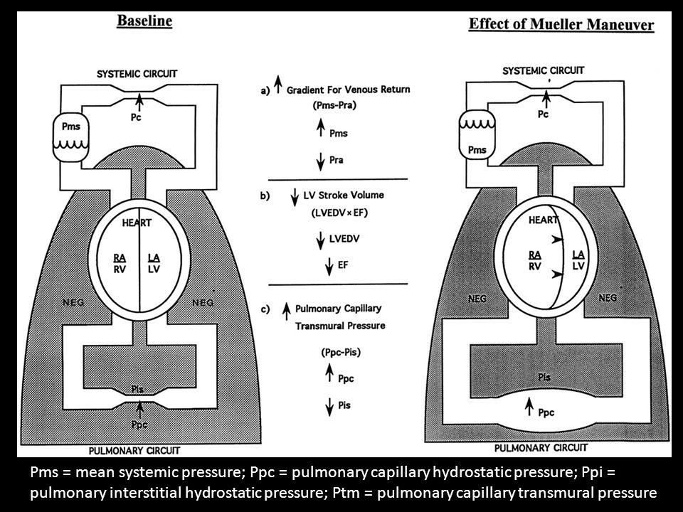 Pms = mean systemic pressure; Ppc = pulmonary capillary hydrostatic pressure; Ppi = pulmonary interstitial hydrostatic pressure; Ptm = pulmonary capillary transmural pressure