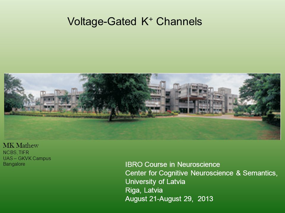 Voltage-Gated K+ Channels