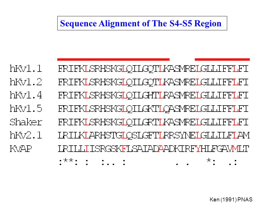 Sequence Alignment of The S4-S5 Region
