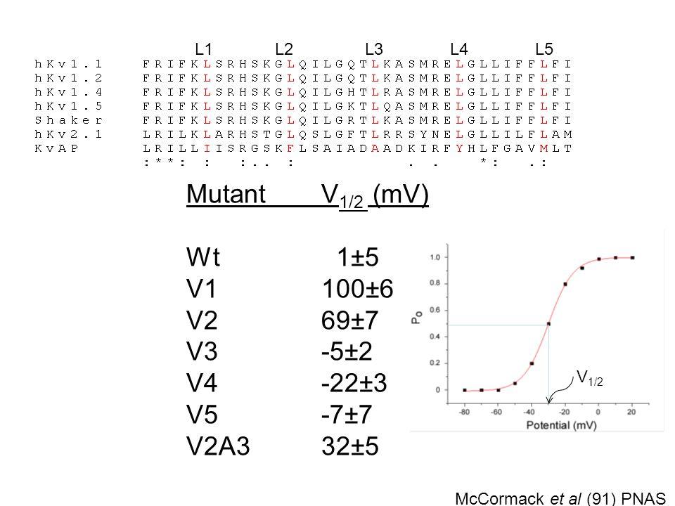 Mutant V1/2 (mV) Wt 1±5 V1 100±6 V2 69±7 V3 -5±2 V4 -22±3 V5 -7±7