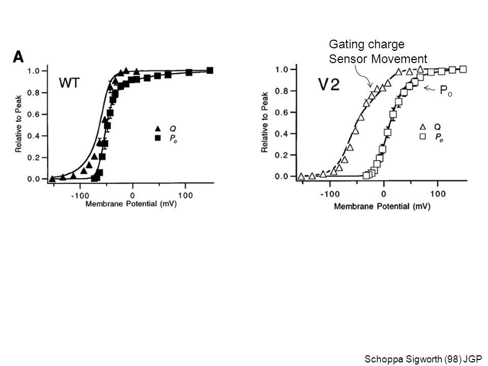 Gating charge Sensor Movement Po Schoppa Sigworth (98) JGP