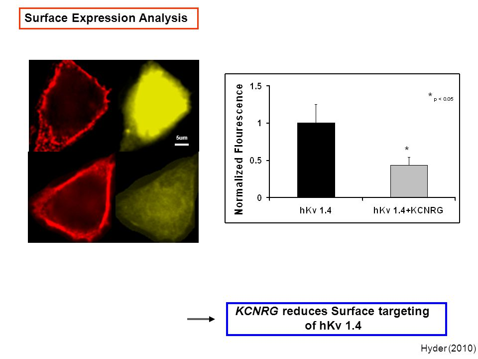 Surface Expression Analysis