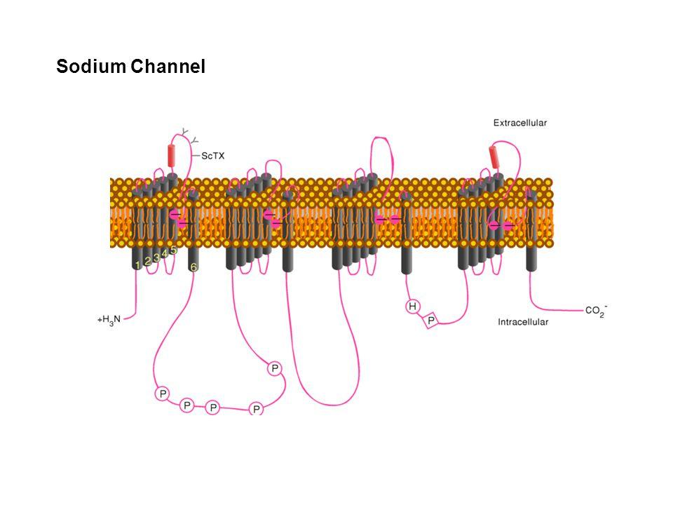 Sodium Channel