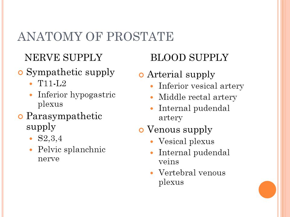 ANATOMY OF PROSTATE NERVE SUPPLY BLOOD SUPPLY Sympathetic supply