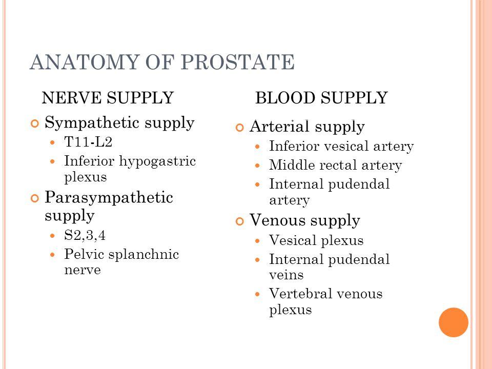 ANATOMY OF PROSTATE NERVE SUPPLY BLOOD SUPPLY Sympathetic supply