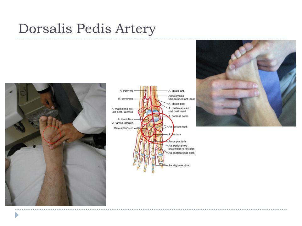 Dorsalis Pedis Artery