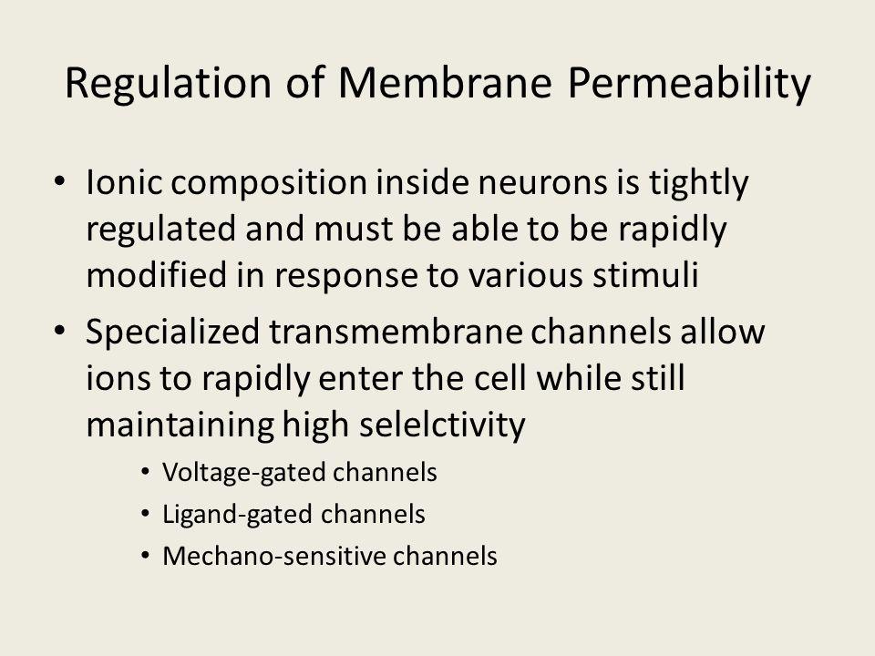 Regulation of Membrane Permeability