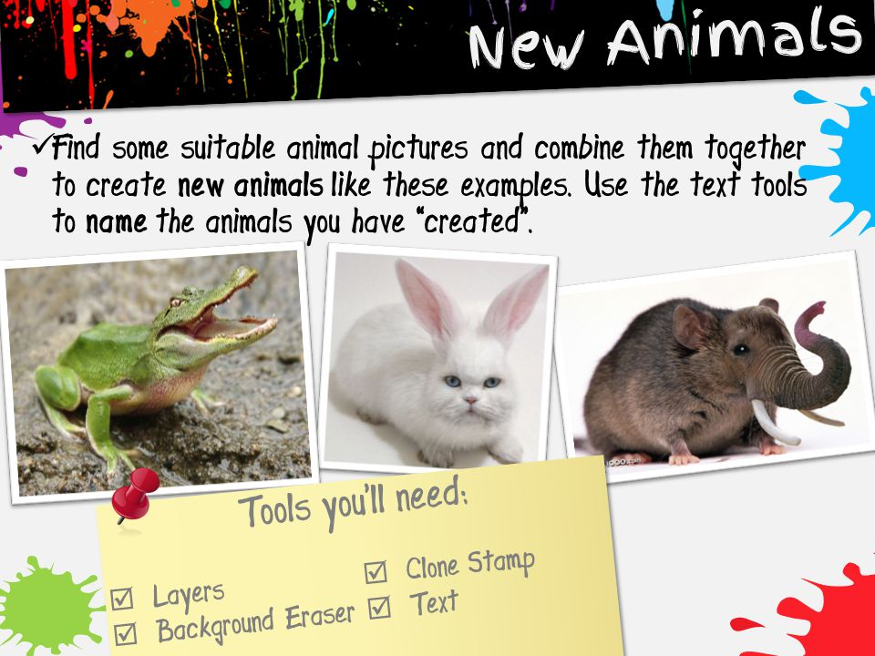 New Animals Tools you'll need: