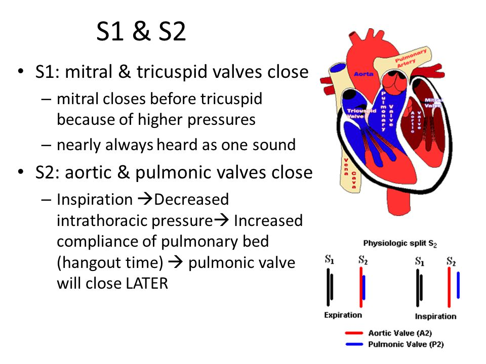 S1 & S2 S1: mitral & tricuspid valves close