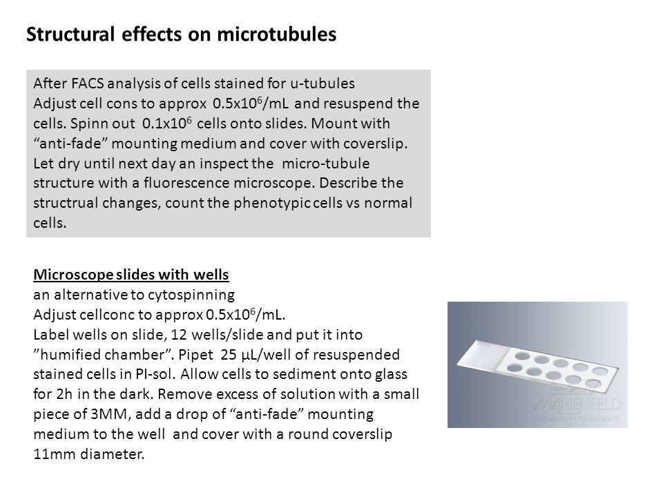 Structural effects on microtubules