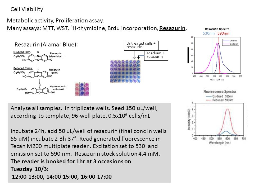 Metabolic activity, Proliferation assay.