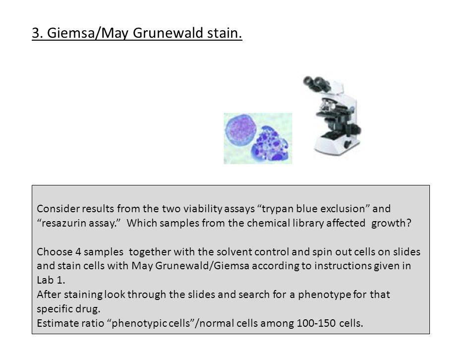 3. Giemsa/May Grunewald stain.