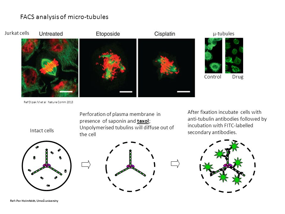 FACS analysis of micro-tubules