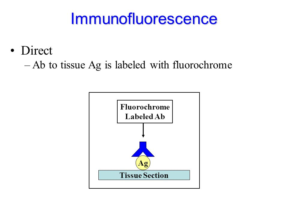 Immunofluorescence Direct Y