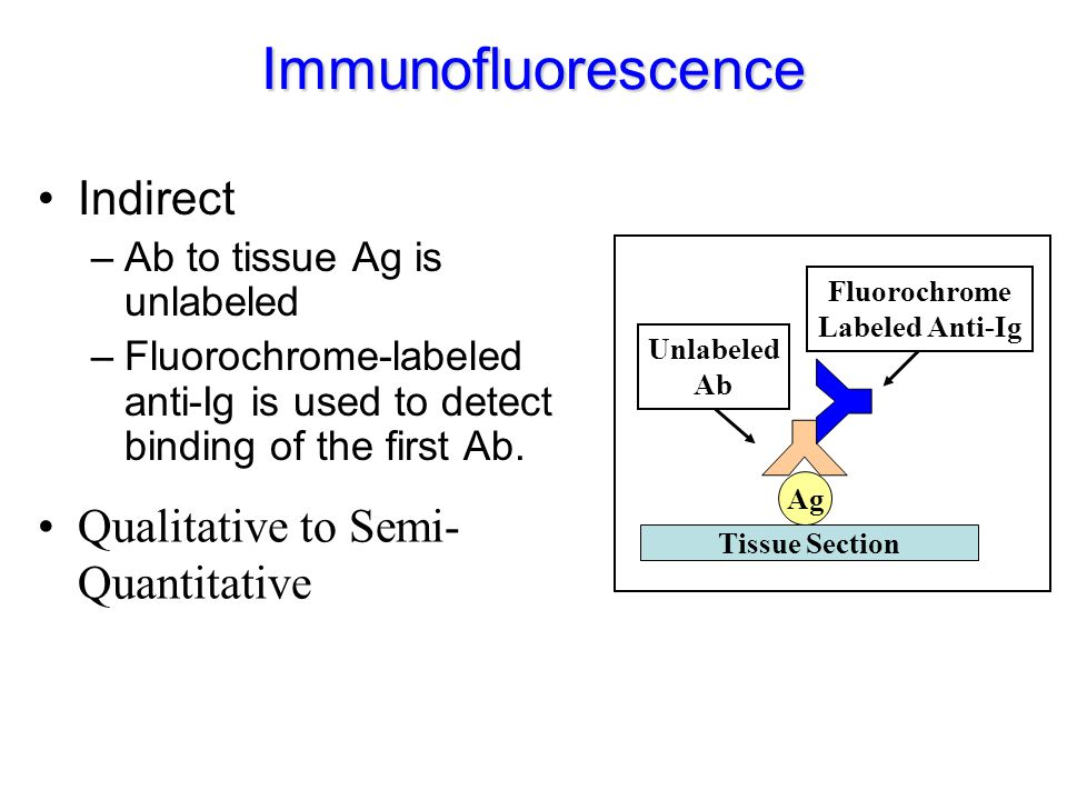 Immunofluorescence Indirect Y Qualitative to Semi-Quantitative