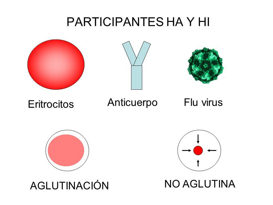 PARTICIPANTES HA Y HI Anticuerpo Flu virus Eritrocitos NO AGLUTINA