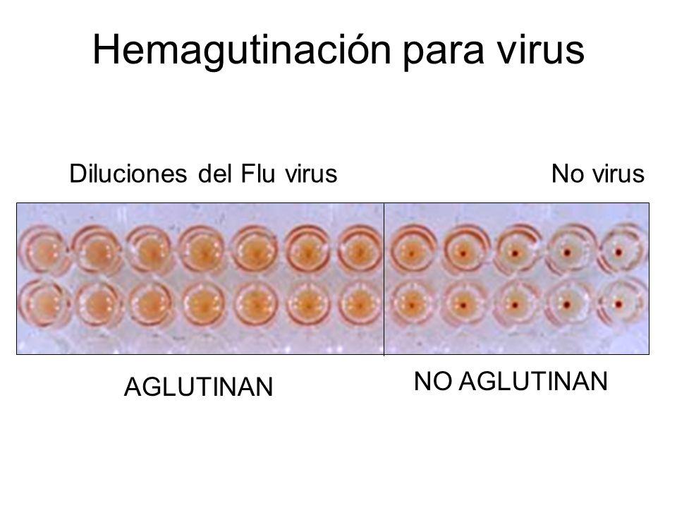 Hemagutinación para virus
