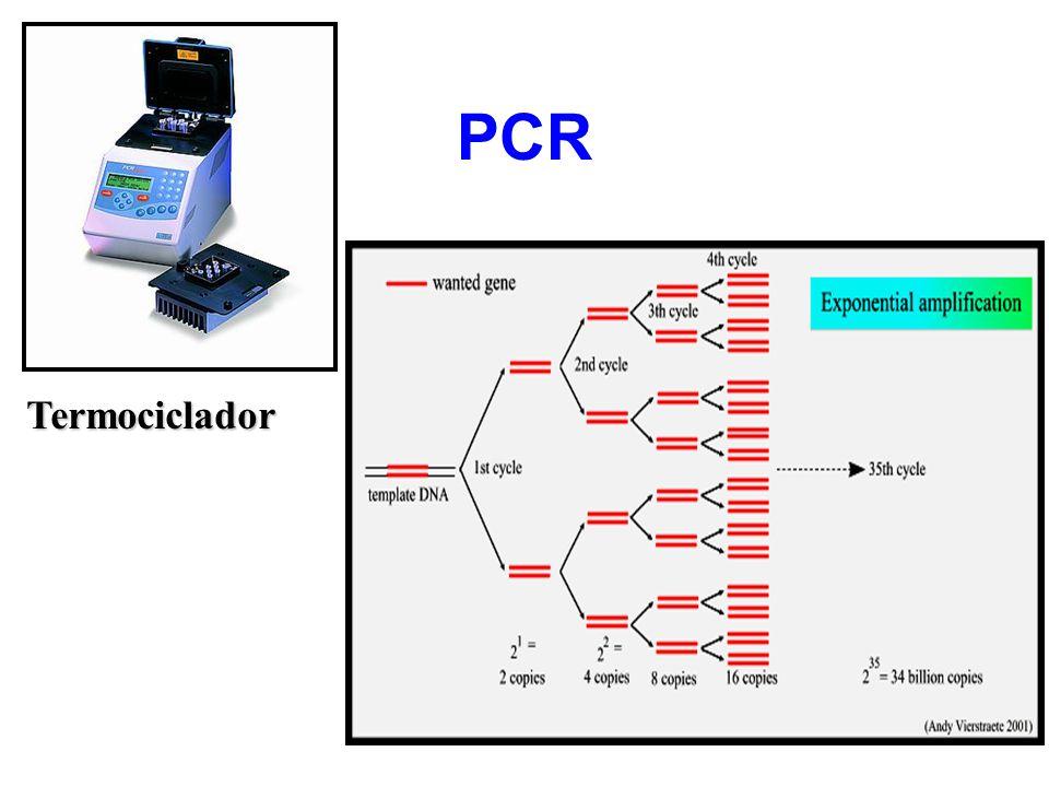 PCR Termociclador
