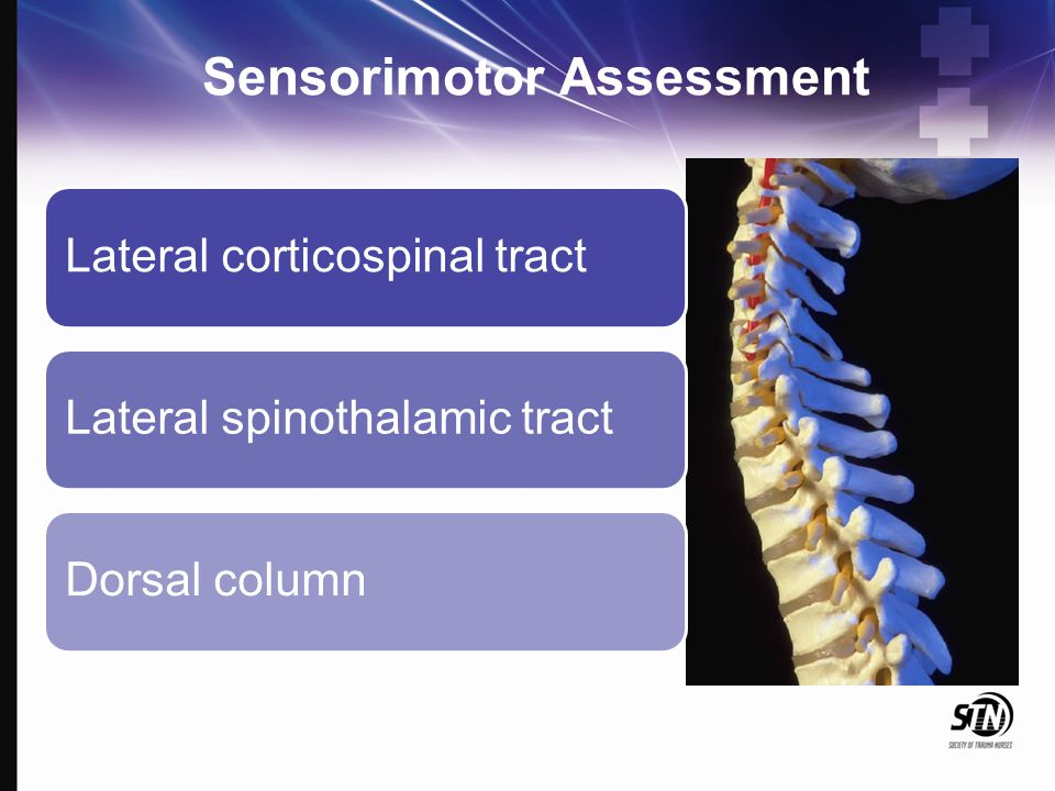 Sensorimotor Assessment