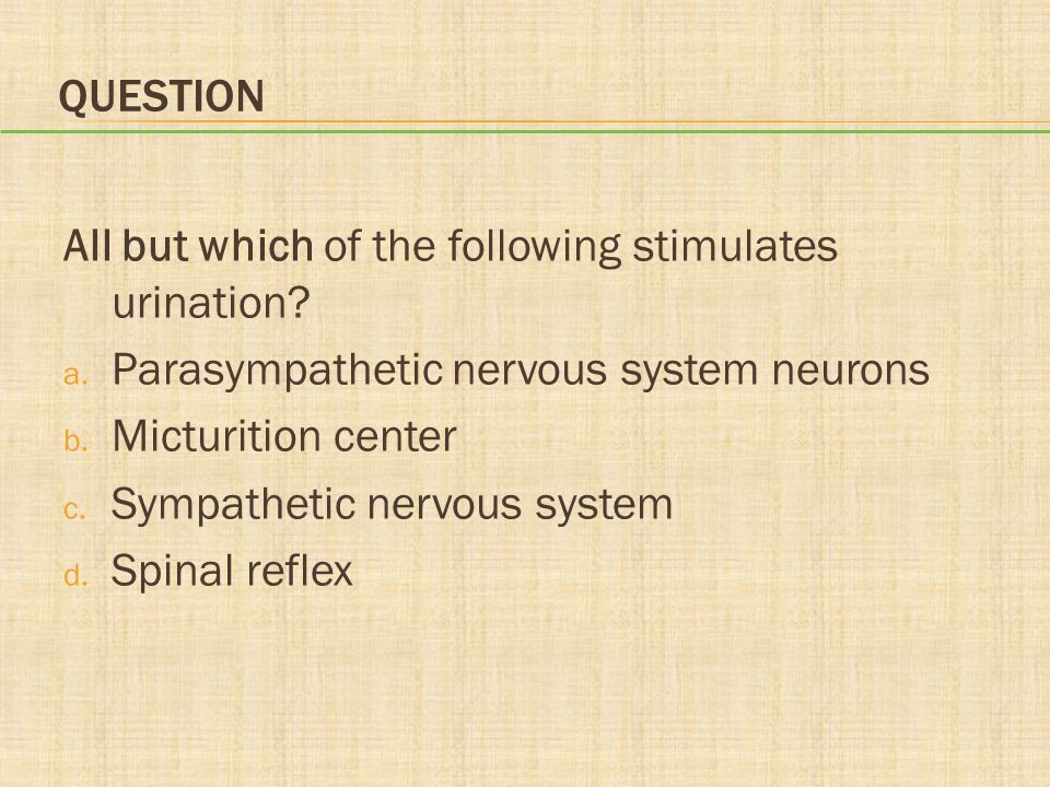 Question All but which of the following stimulates urination Parasympathetic nervous system neurons.