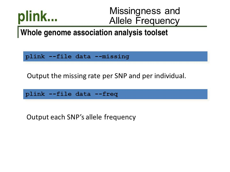 Missingness and Allele Frequency Output each SNP's allele frequency