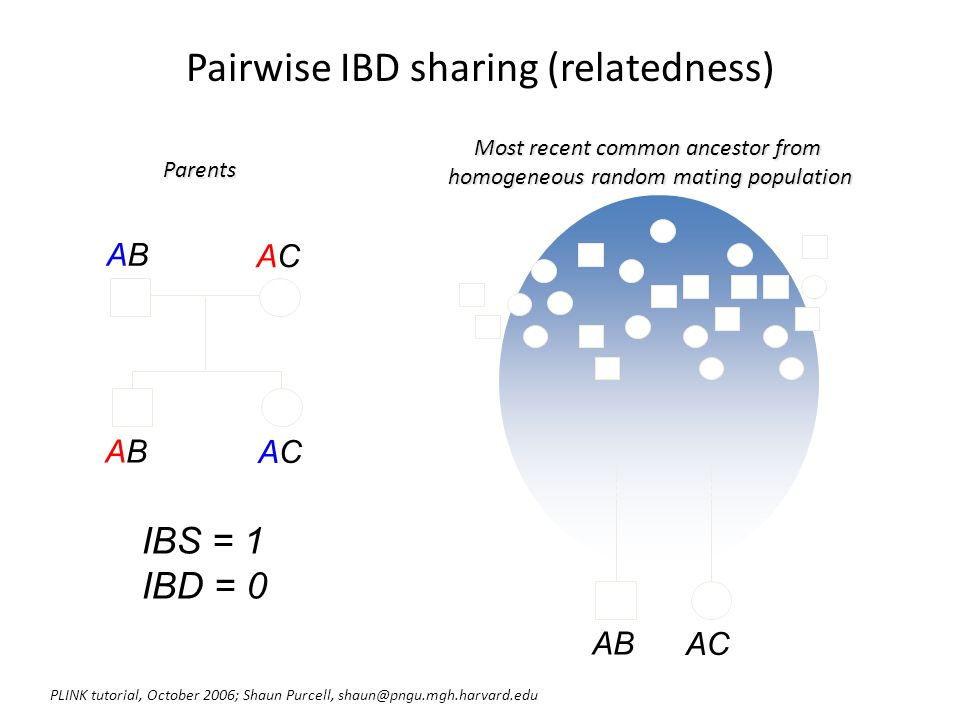 Pairwise IBD sharing (relatedness)