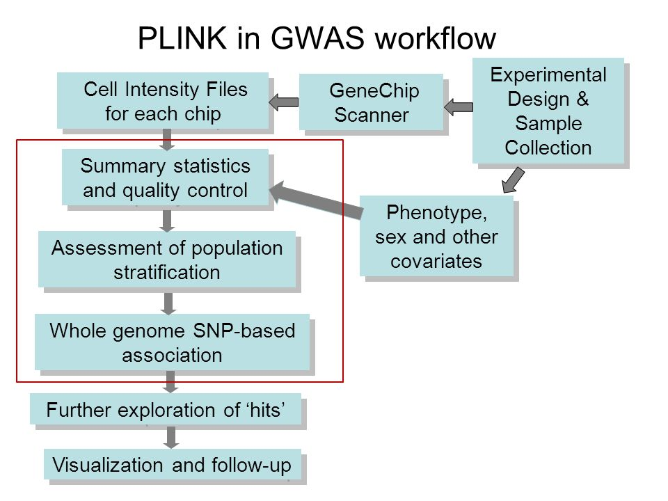 PLINK in GWAS workflow Experimental Design & Sample Collection