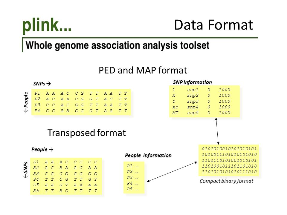 Data Format PED and MAP format Transposed format SNP information
