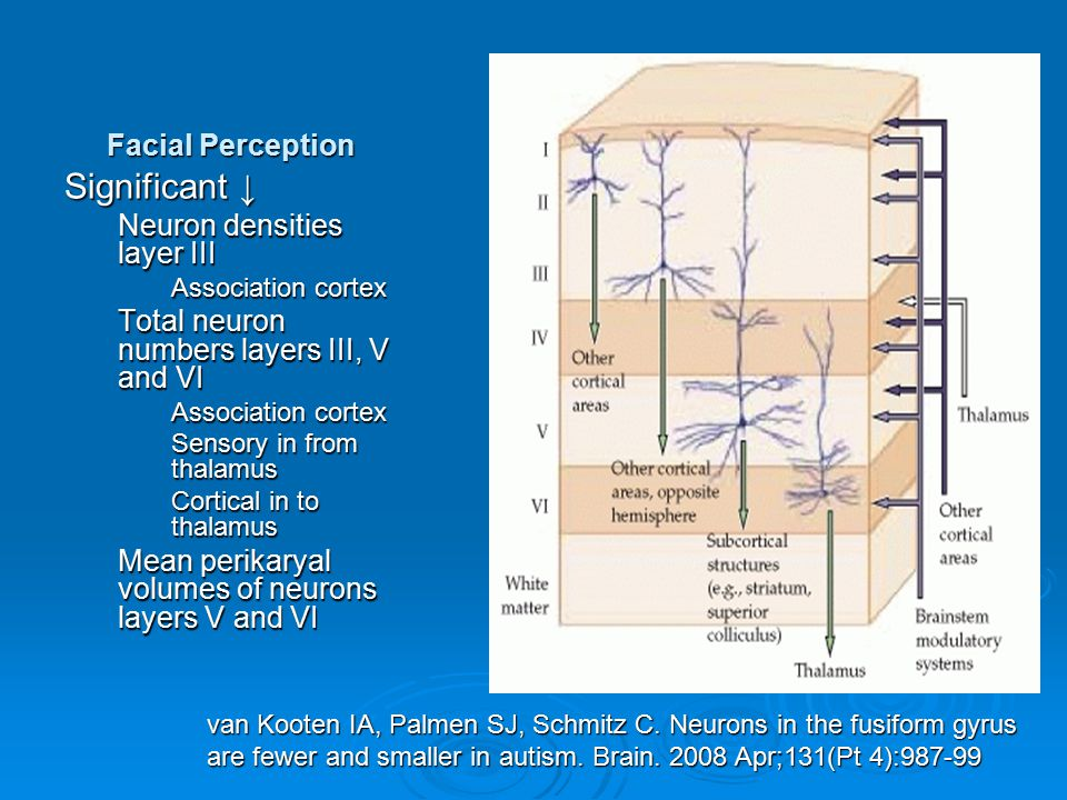 Significant ↓ Facial Perception Neuron densities layer III