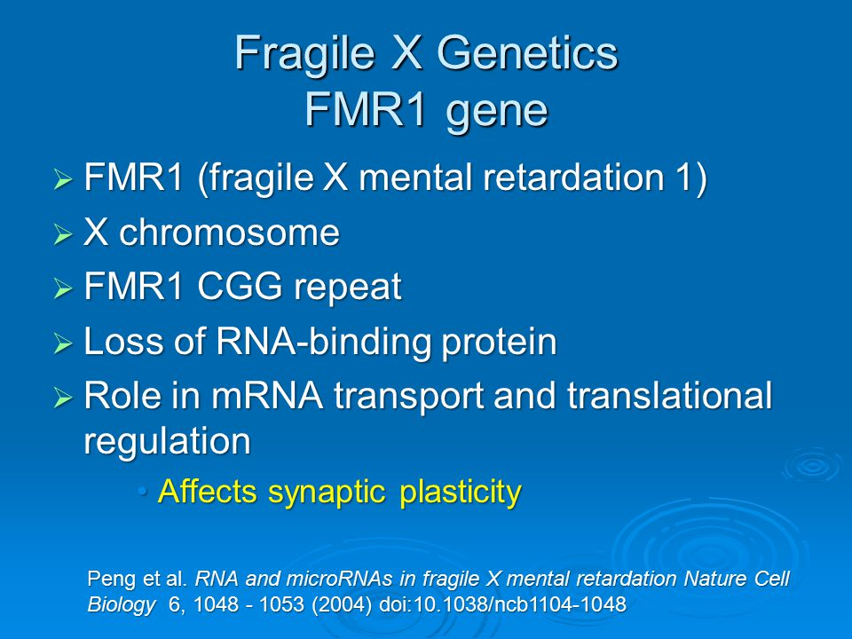 Fragile X Genetics FMR1 gene
