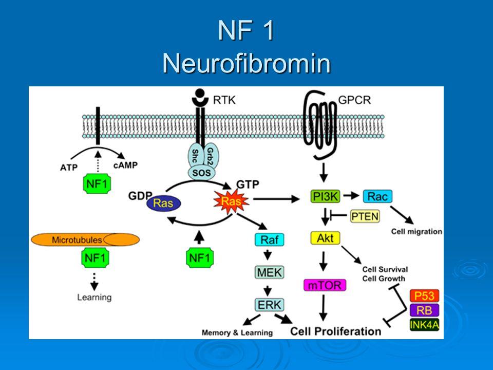 NF 1 Neurofibromin
