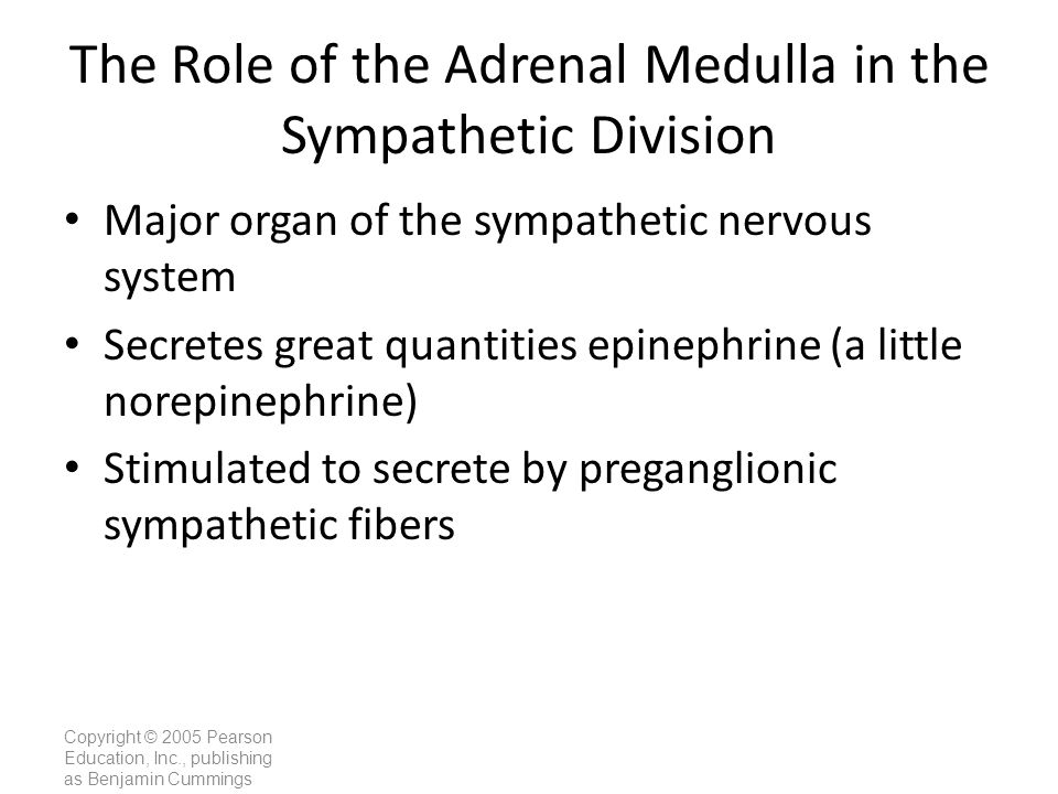 The Role of the Adrenal Medulla in the Sympathetic Division
