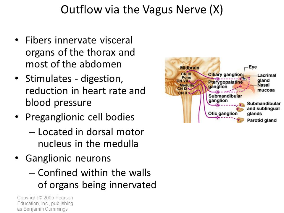 Outflow via the Vagus Nerve (X)