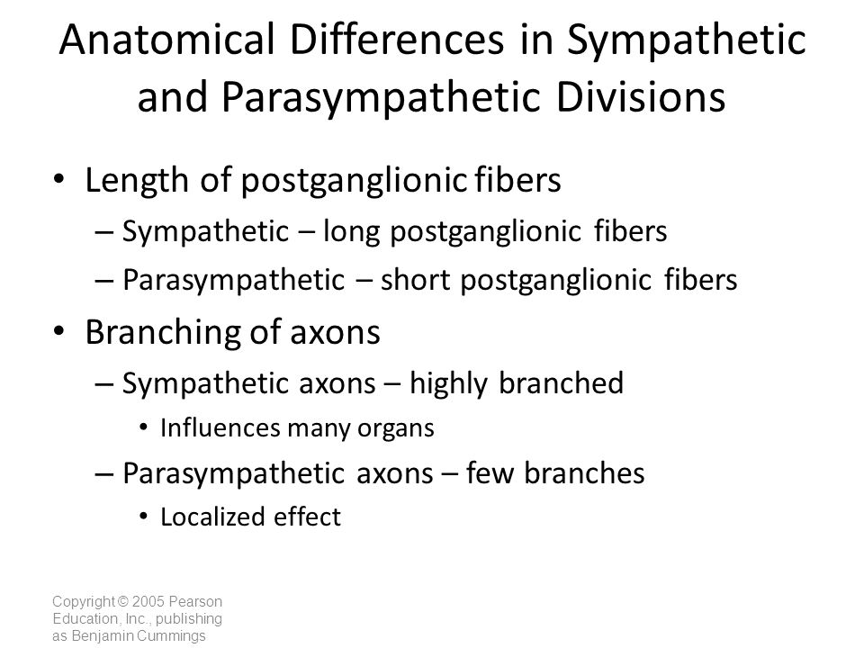 Anatomical Differences in Sympathetic and Parasympathetic Divisions