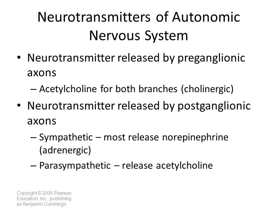 Neurotransmitters of Autonomic Nervous System