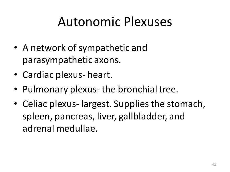 Autonomic Plexuses A network of sympathetic and parasympathetic axons.