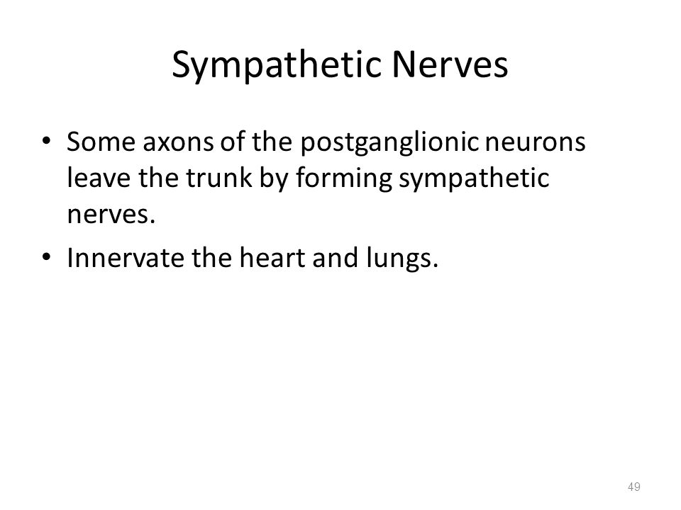 Sympathetic Nerves Some axons of the postganglionic neurons leave the trunk by forming sympathetic nerves.