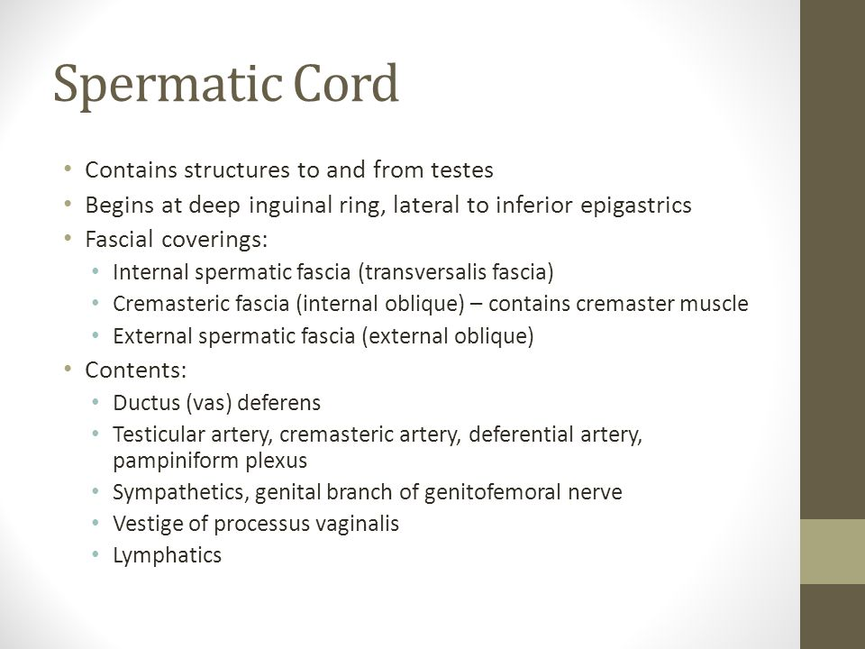 Spermatic Cord Contains structures to and from testes