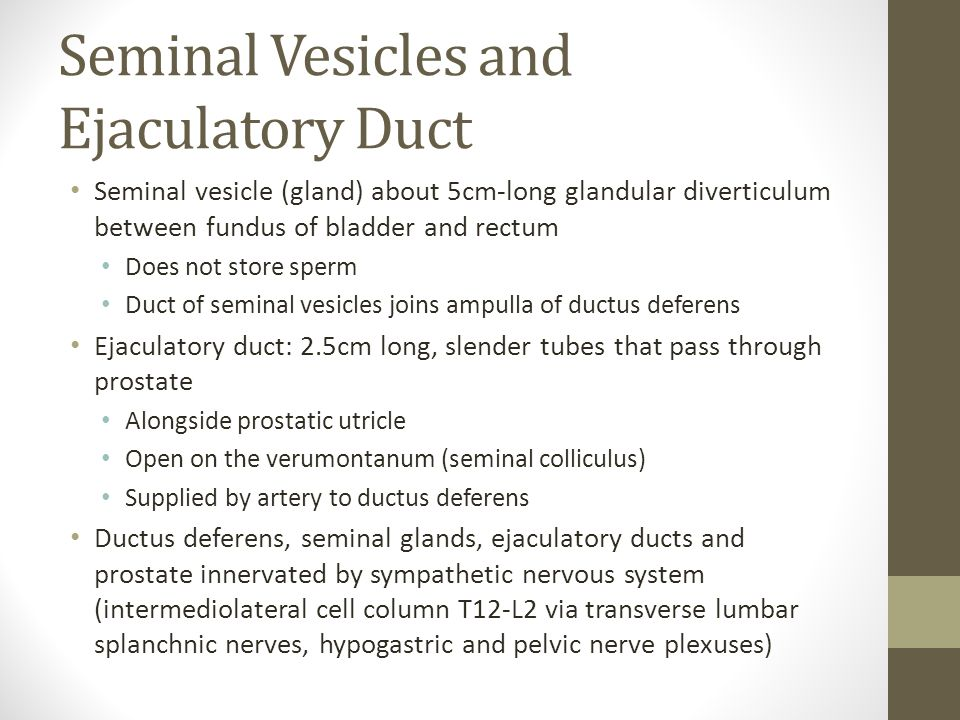 Seminal Vesicles and Ejaculatory Duct