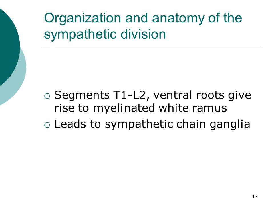 Organization and anatomy of the sympathetic division