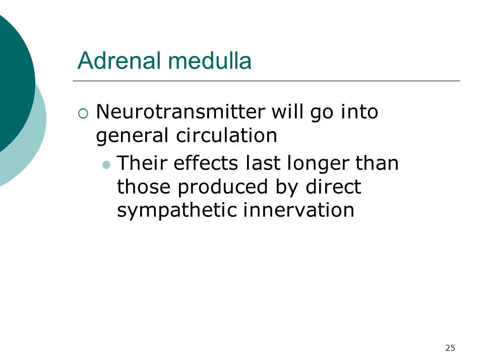 Adrenal medulla Neurotransmitter will go into general circulation
