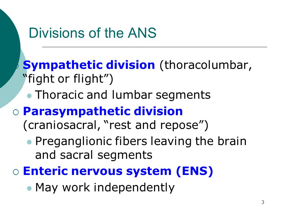 Divisions of the ANS Sympathetic division (thoracolumbar, fight or flight ) Thoracic and lumbar segments.