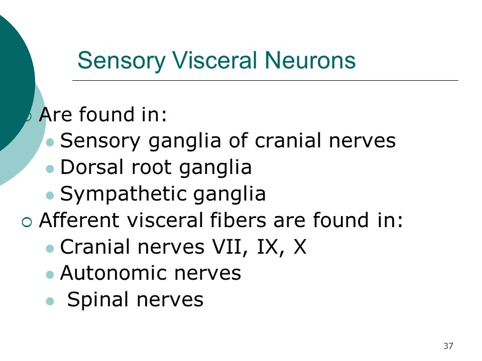 Sensory Visceral Neurons